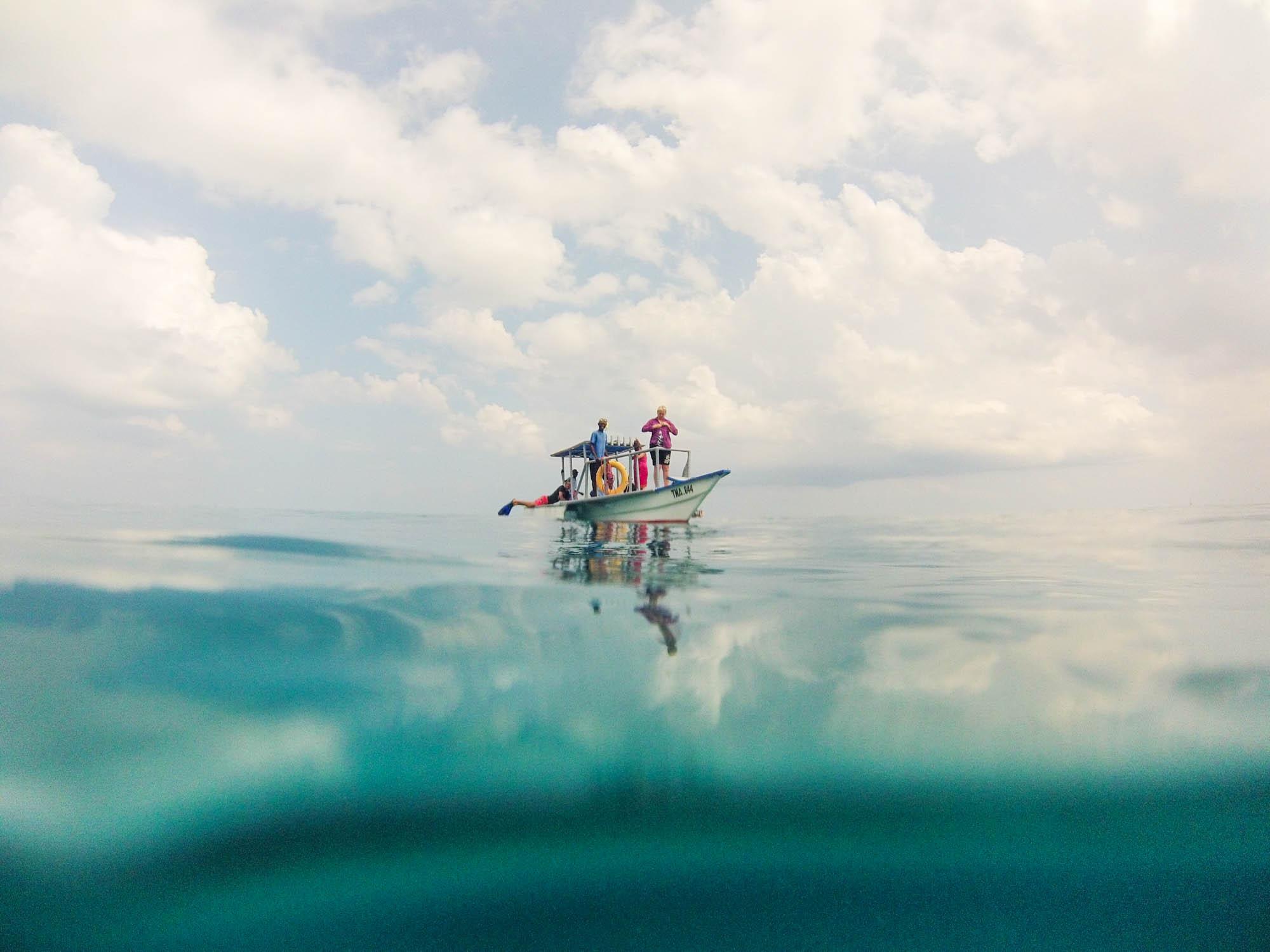 Whale Sharks Mafia Island Butiama Beach