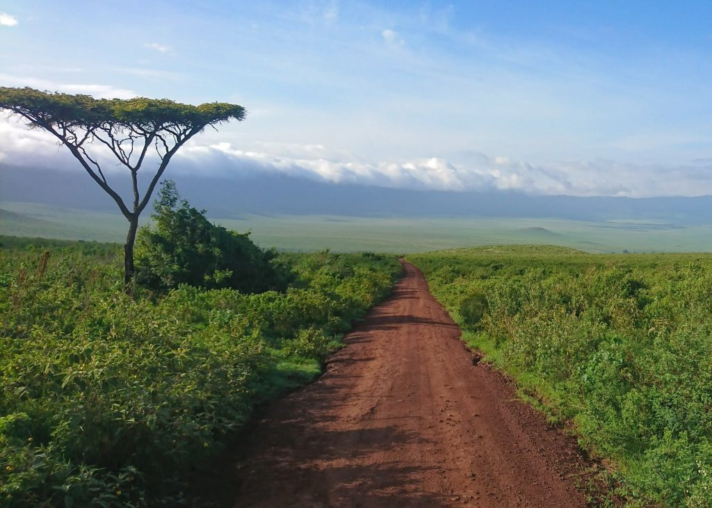 Dirt road in the Ngorongoro Crater