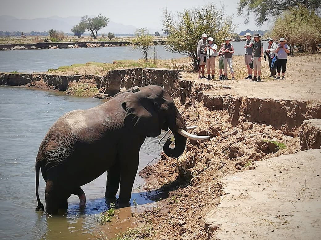 elephant_mana_pools