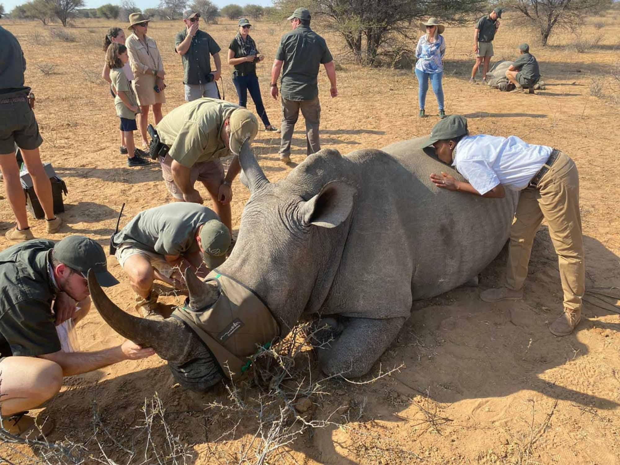Rhino marataba