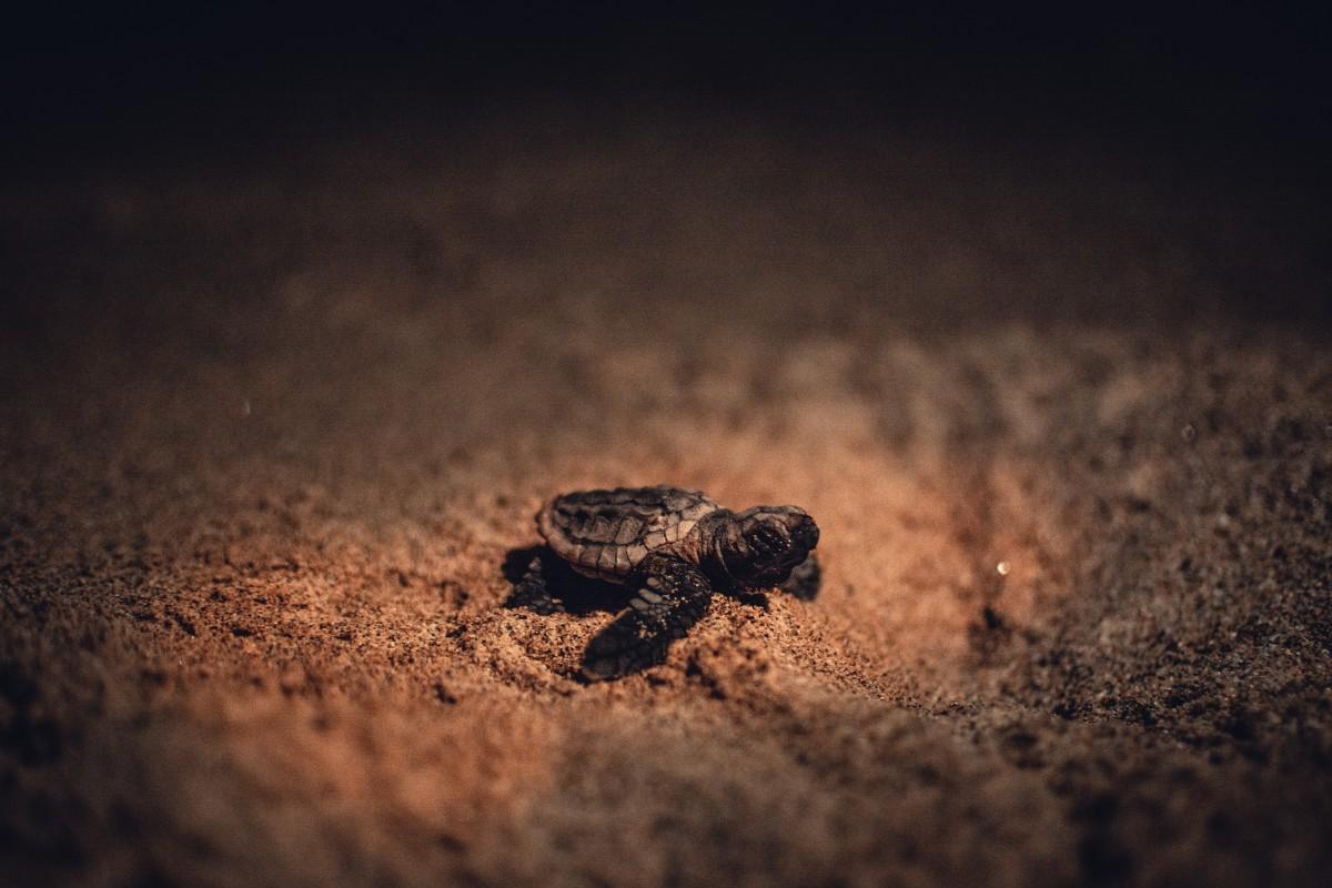 Turtles South Africa Maputaland