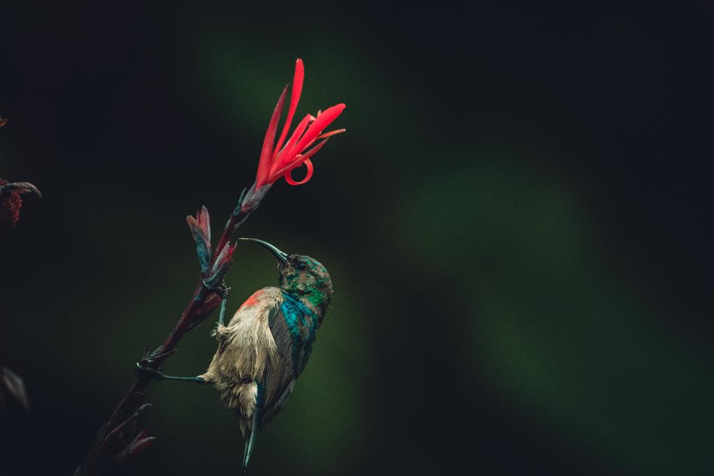 Bwindi Birds