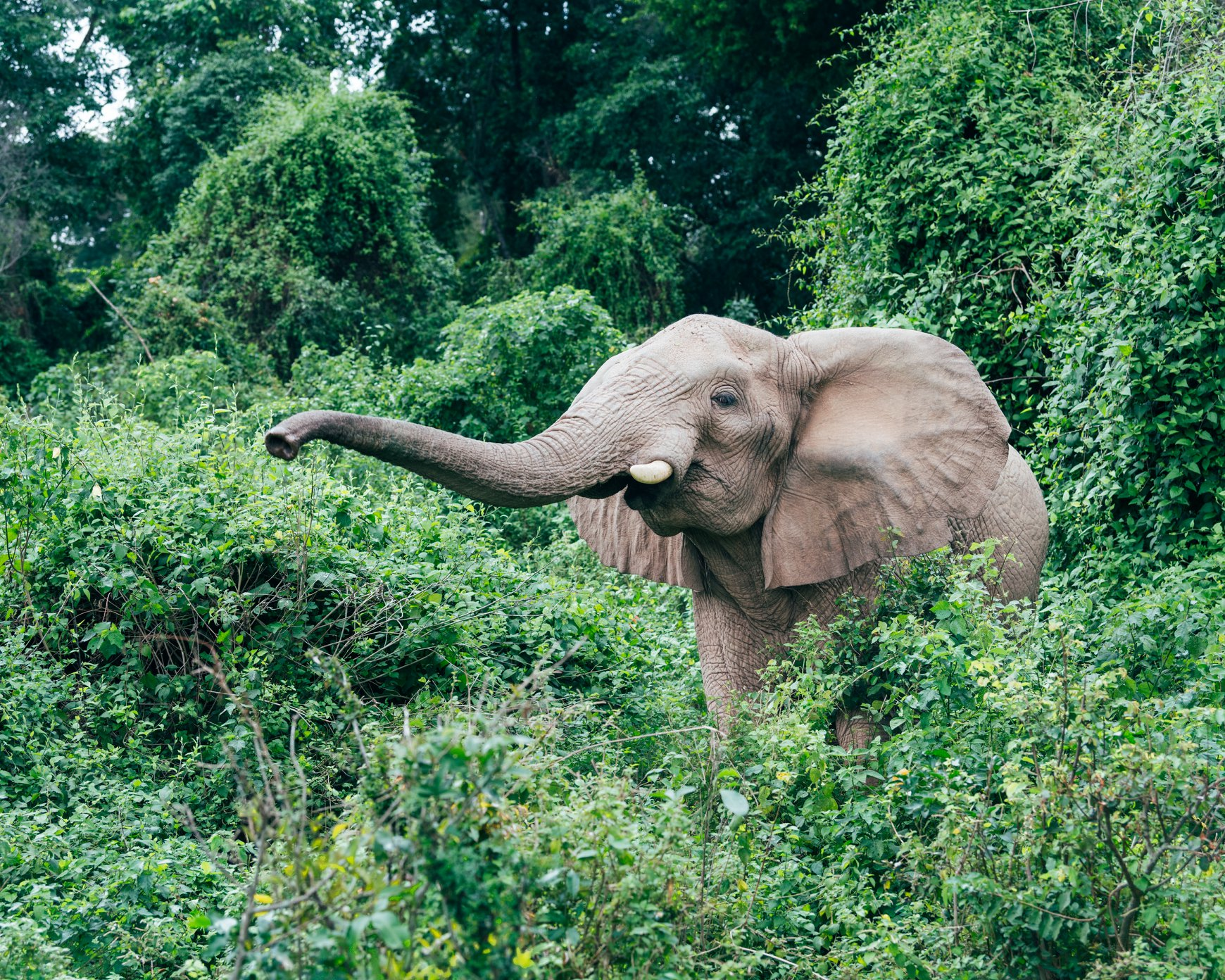 Elephant seen in the forests on Robundo Island