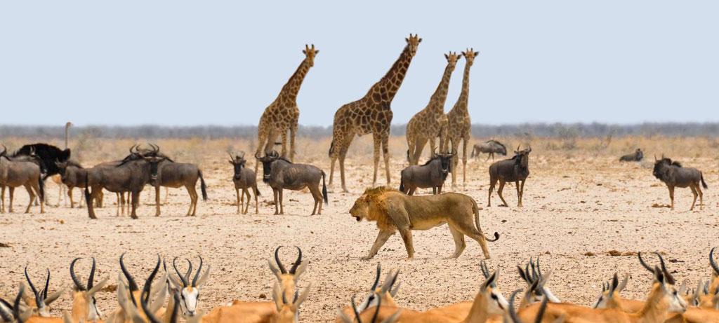 best-african-safari