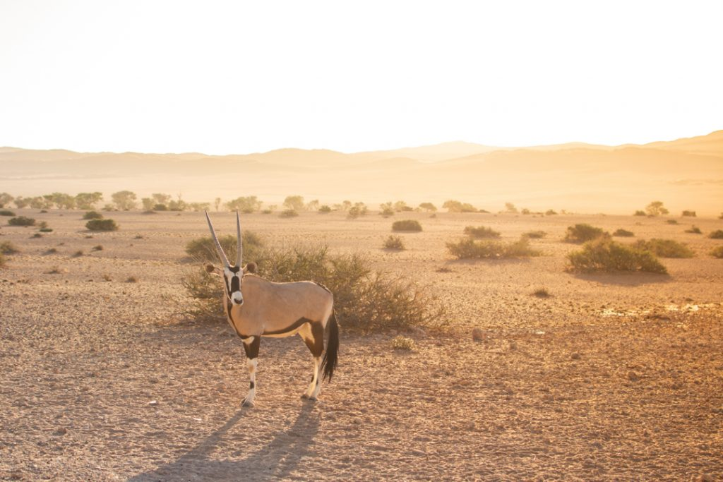 Best places to stay in Namibia