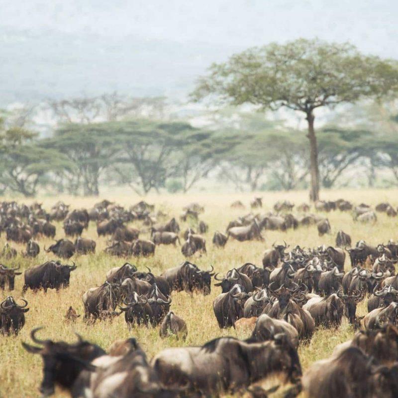 Header - Classic Tanzania