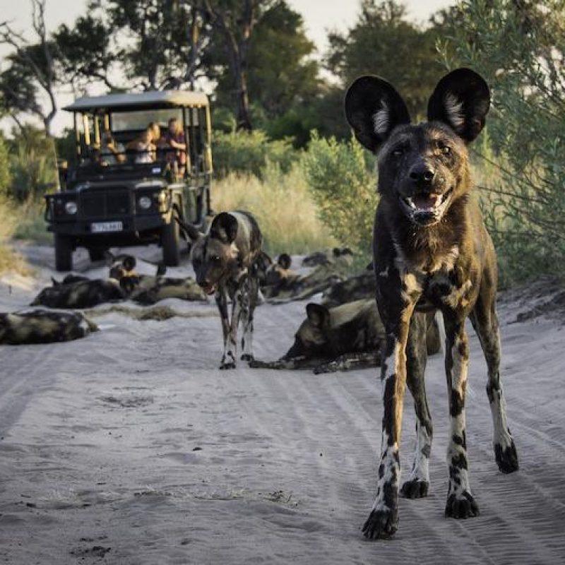 Main image - Classic botswana
